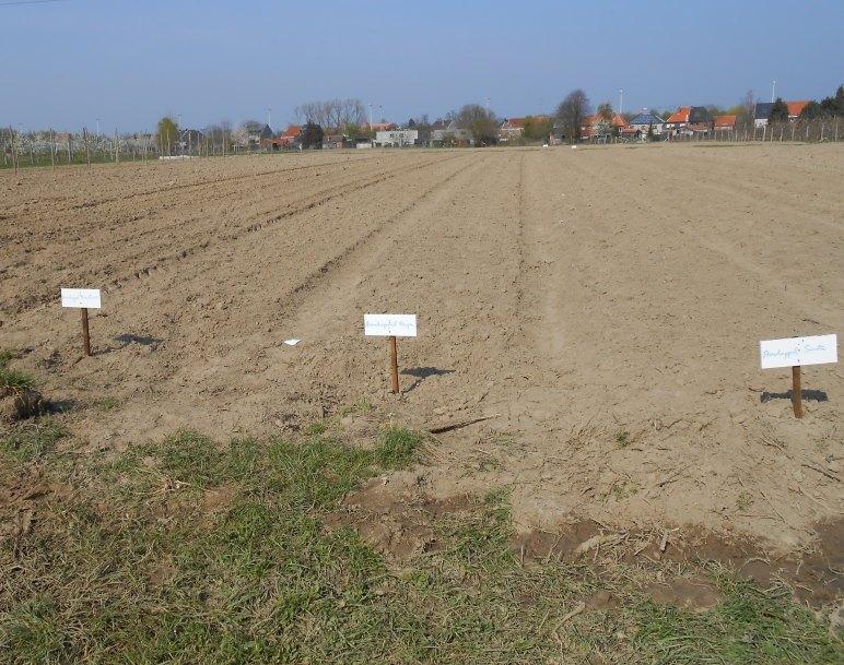 Zelfoogsttuin april 2012 - aardappelen