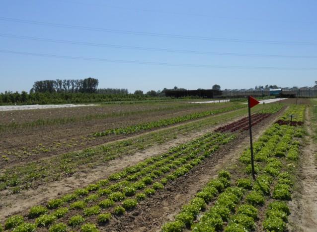Zelfoogsttuin Hasselt - overzichtsfoto van het veld - mei 2012